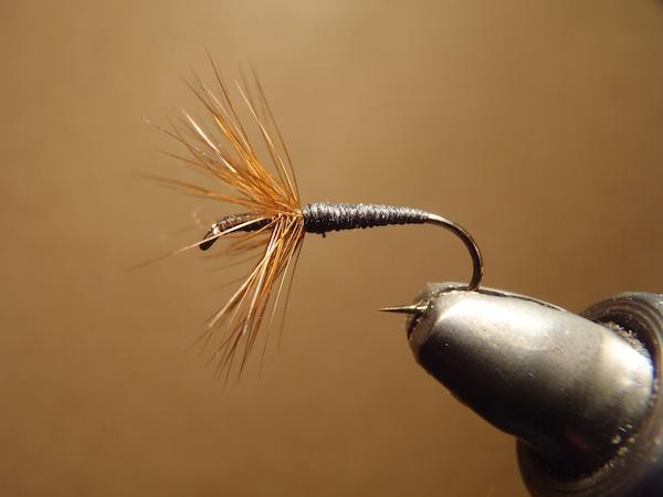 Dr. Ishigaki Fly