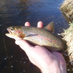 Bear Creek Trip Report April 1st, 2012