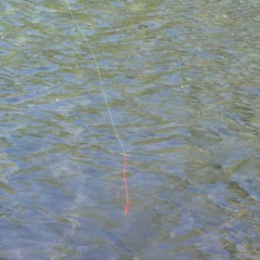 Does Tenkara Line Visibility Matter?