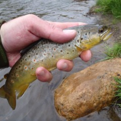 Three Firsts on Bear Creek