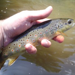 One Fly Tenkara Memorial Day