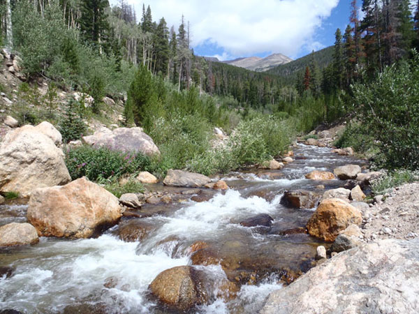 The Roaring River in Rocky Mountain National Park
