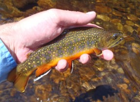Does Tenkara Actually Catch More Fish?