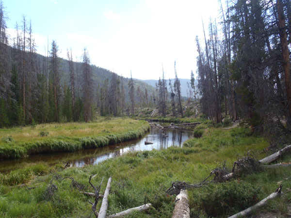 North Inlet Creek in the Meadow