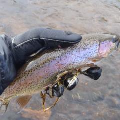 South Platte River 12/27/2012