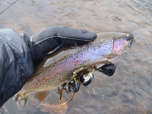 South Platte Rainbow