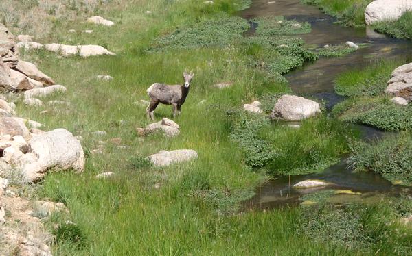 Tenkara in Meadow Streams