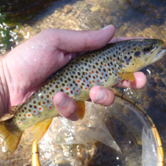 Boulder Creek 7/23/2013