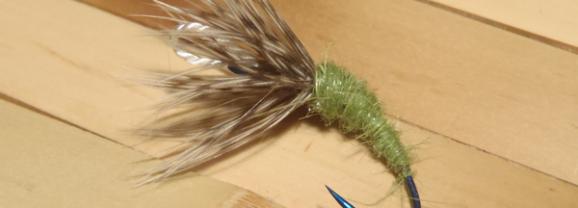 Sparse Vs. Heavily-dressed Flies