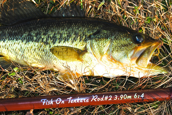 A tenkara-caught bass