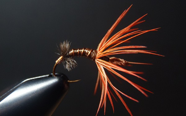 Orange parrot hackle sakasa kebari