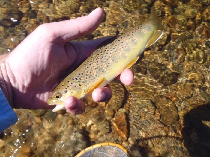Moraine Park Brown Trout